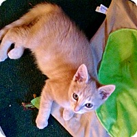 Adopt A Pet :: Scotty - Southington, CT