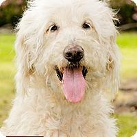 Adopt A Pet :: Wilhelmina [PENDING] - Marina del Rey, CA