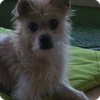 Adopt A Pet :: Trixie - Ball Ground, GA