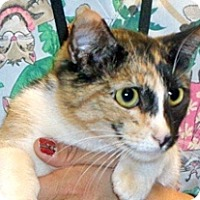 Adopt A Pet :: Princess - Wildomar, CA