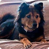 Adopt A Pet :: Maggie - Rochester, NY