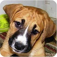 Adopt A Pet :: Faith - Sunderland, MA