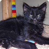 Adopt A Pet :: Lacy - Chandler, AZ