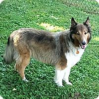 Adopt A Pet :: Rosie - Abingdon, MD