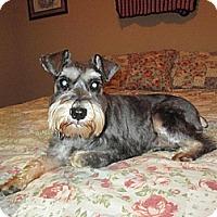 Adopt A Pet :: Minnie - Springfield, MO