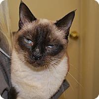 Adopt A Pet :: Godiva - New Egypt, NJ