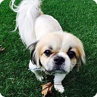 Adopt A Pet :: Alex - Beavercreek, OH