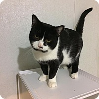 Adopt A Pet :: Mötley Crüe - Barn Cat - Broadway, NJ