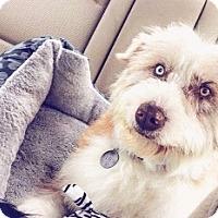Adopt A Pet :: Switch - Polson, MT