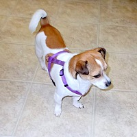 Adopt A Pet :: Bandit 1 - Girard, GA