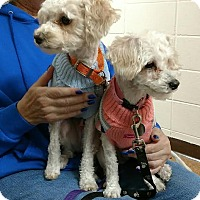 Adopt A Pet :: PeeWee and Apricot - Huntley, IL