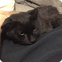 Adopt A Pet :: Alfie - New York, NY