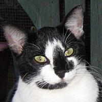 Adopt A Pet :: Sassy - Mobile, AL