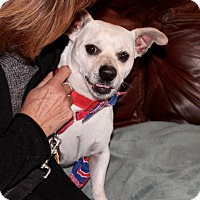 Adopt A Pet :: Cubby - Munster, IN