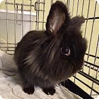 Adopt A Pet :: Bella - Woburn, MA