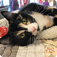 Adopt A Pet :: Emily Dickinson - Newtown Square, PA