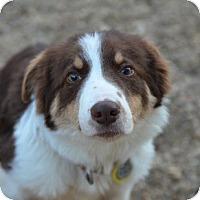 Adopt A Pet :: Link - Garland, TX
