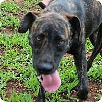 Adopt A Pet :: Jerzy--Reduced fee to $200 - Spring Valley, NY