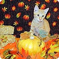 Adopt A Pet :: Garfield - Orlando, FL