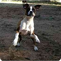 Adopt A Pet :: Ollie - Albany, GA