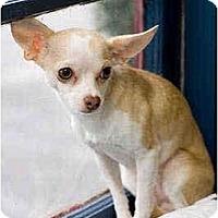 Adopt A Pet :: Daisy May - Portland, OR