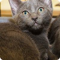 Adopt A Pet :: Rachel II - Irvine, CA