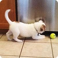 Adopt A Pet :: WRIGLEY - Higley, AZ