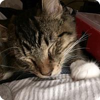 Adopt A Pet :: Craig - Hernando, MS
