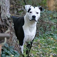 Adopt A Pet :: Francis - Dayton, OH
