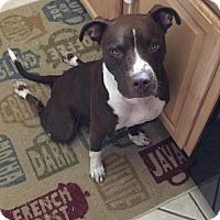 Adopt A Pet :: Gemma - Centerburg, OH