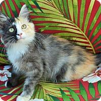 Adopt A Pet :: Twinkle - Lake Worth, FL