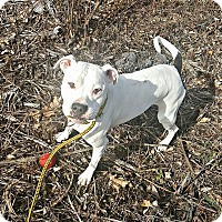 Adopt A Pet :: Kiki Dee - West Allis, WI