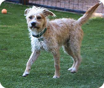 Terrier (Unknown Type, Medium) Mix Dog for adoption in Woonsocket, Rhode Island - Harris - MEET ME