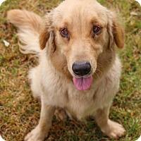 Adopt A Pet :: Gail - Pipe Creed, TX
