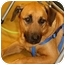 Photo 1 - Shepherd (Unknown Type)/Mountain Cur Mix Dog for adoption in Key Biscayne, Florida - Cooper
