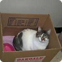 Adopt A Pet :: Romona - Meriden, CT