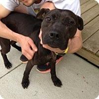 Adopt A Pet :: Brian - Laingsburg, MI