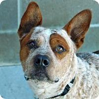 Adopt A Pet :: Frank - Cheyenne, WY