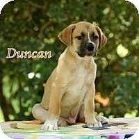 Adopt A Pet :: Duncan - Kingwood, TX
