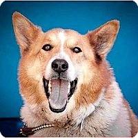 Adopt A Pet :: Graham - Gardena, CA