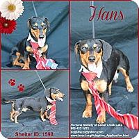 Adopt A Pet :: Hans - Plano, TX