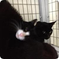 Adopt A Pet :: Ollie & Boo Boo - Winter Haven, FL