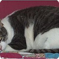 Adopt A Pet :: Maynard - El Cajon, CA
