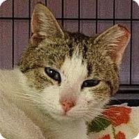 Adopt A Pet :: Aurora - Monroe, GA
