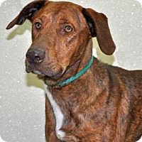 Adopt A Pet :: Maury - Port Washington, NY