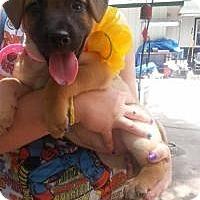 Adopt A Pet :: Lindy Ruff - New Boston, NH