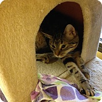 Adopt A Pet :: Presley - Lake Charles, LA