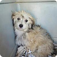 Adopt A Pet :: Griffin - Algonquin, IL