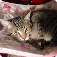 Adopt A Pet :: Kobi - Colmar, PA