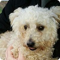 Adopt A Pet :: Veto - Huntingburg, IN